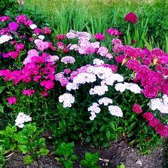#sunday #flowers photography enjoy you day ❤