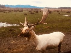 Escape For The Day: Olympic Game Farm