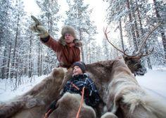 Santa Claus Reindeer photo: Santa Claus Reindeer ride in Lapland in Finland – Reindeer ride in Santa Claus Village in Rovaniemi Reindeer Photo, Reindeer And Sleigh, Santa Claus Village, Santa's Village, Lapland Finland, Arctic Circle, Safari, Photos, Sleigh Rides