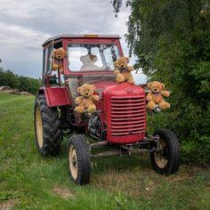 Teddy Hermann, Teddy Bear Pictures, Bear Wallpaper, Love Bear, Cute Bears, Plushies, Needle Felting, Arusha, Teddy Bears