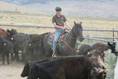 Blue and I getting a handle on the cows