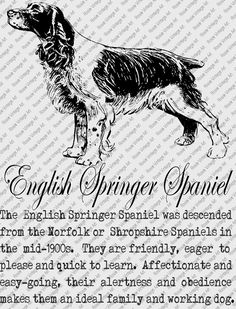 ENGLISH SPRINGER SPANIEL Download Instant Digital Vintage Art with Description Printable Frame Cards Fabric Transer Iron On by RosiesVintageArtShop on Etsy