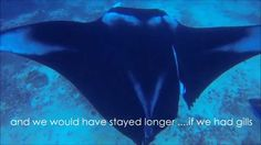 These divers were just taking in the sites when they came across an enormous manta ray caught in some fishing line. It wasn't easy, but their guide was able to cut it free. What the ray did next will surprise you!