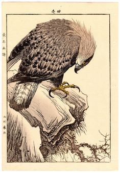 Lotto 00779 N.1 xilografia ukiyo-e Imao Keinen AQUILA REALE Anno: 1892 Condizioni: buone Dimensioni: 25 x 36,5 cm