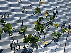 Kontrast - contrast - http://www.smg-design.de/kontrast/