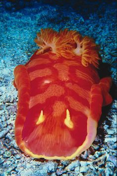 Google Image Result for http://www.answersingenesis.org/assets/images/articles/aqua/Sea_Slug.jpg