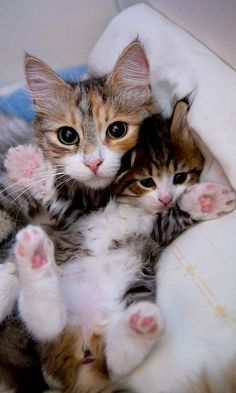 Mommy cat and kid