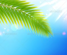 Summer background #GraphicRiver Vector illustration of tropical summer background palm tree leaf Created: 16July12 GraphicsFilesIncluded: JPGImage #VectorEPS Layered: No MinimumAdobeCSVersion: CS Tags: background #beach #beauty #blue #climate #dream #frond #green #heat #idyllic #illustration #leaf #leisure #nature #outdoor #palm #palmtree #plant #relaxation #scenics #sky #summer #sun #sunlight #travel #tree #tropical #turquoise #vacation #vector
