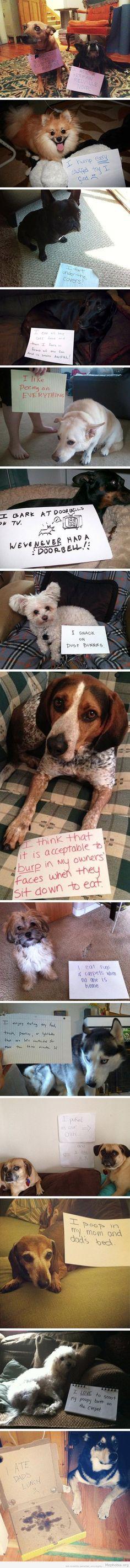 Bad Dog! lol