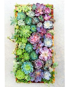 Urban Jungles: Currently crushing on succulents - my home is starting to feel like an urban jungle! howsweeteats.com Big Garden, Small Backyard Gardens, Small Gardens, Outdoor Gardens, Kitchen Gardening, Garden Basket, Basket Ideas, Decking, Small Boxes