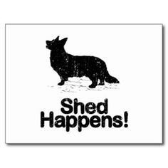 Cardigan Welsh Corgi Post Card, Shed Happens! Yes, it does.