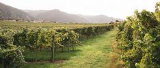 Wachau Inside   Tipps & Empfehlungen   Übernachten Austria, Vineyard, Outdoor, Vacation, Hiking, Tips, Outdoors, Vine Yard, Vineyard Vines