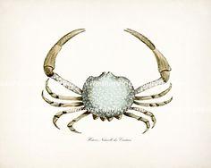 Blue Crab Vintage Etching Natural History Beach Style Wall Decor Print No. 1 10x8. $15.00, via Etsy.