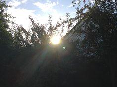 Light through the leaves