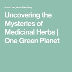 Uncovering the Mysteries of Medicinal Herbs | One Green Planet