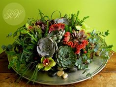 Tabletop arrangement of succulents - on damp moss. Mist every 4-5 days. By Robin Wood in Cincinnati