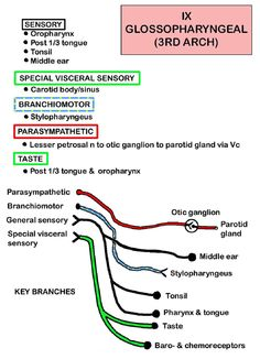 Instant Anatomy - Head and Neck - Nerves - Cranial - IX (Glossopharyngeal)