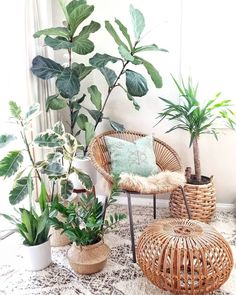 DIY Decor Ideas To Give Your Space That Log Cabin Vibe. If you're into boho ru., 4 DIY Decor Ideas To Give Your Space That Log Cabin Vibe. If you're into boho ru., 4 DIY Decor Ideas To Give Your Space That Log Cabin Vibe. If you're into boho ru. Plantas Indoor, Living Room Decor, Bedroom Decor, Plants In Bedroom, Living Room With Plants, Plant Rooms, Design Bedroom, Bedroom Ideas, Dining Room