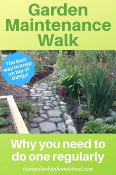 Garden Maintenance Walk: The Best Way To Keep on Top of Things : Do you want to keep on top of what is going on in your garden? Taking a regular garden maintenance walk will help you grow better vegetables and fruit. Organic Gardening, Gardening Tips, Pruning Plants, Backyard Layout, Plant Diseases, Home Vegetable Garden, Garden Maintenance, Planting Vegetables, Garden Pests