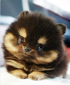 He's so fluffy!! Omg. I can't even.
