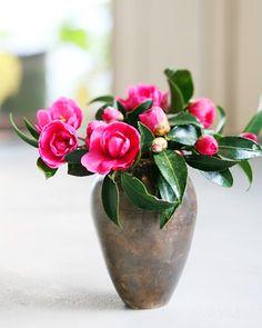Tsubaki (Camellia)
