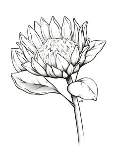 Pencil Art Drawings, Drawing Sketches, Sketch Art, Fleur Protea, Art Du Croquis, Flower Drawing Tutorials, King Protea, Protea Flower, Easy Canvas Art