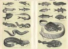 Image result for ichthyology.