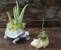 DIY Plastic Animal Planters Make these little succulent friends with plastic toy animals and a little imagination! Plastic Animal Crafts, Plastic Animals, Air Plants, Indoor Plants, Crafts To Sell, Diy And Crafts, Crafts For Kids, Cactus, Belleza Natural