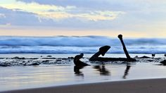 Explore Great Ocean Road holidays and discover the best time and places to visit. Water People, Melbourne Victoria, Crashing Waves, Seaside Towns, Australia Travel, Lonely Planet, Wonderful Places, Surfing, National Parks