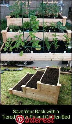 Enjoy gardening without breaking your back with this tiered cedar raised garden bed! Enjoy gardening without breaking your back with this tiered cedar raised garden bed! Cedar Raised Garden Beds, Cedar Garden, Raised Vegetable Gardens, Vegetable Garden Design, Vegetable Gardening, Raised Beds, Organic Gardening, Raised Gardens, Raised Herb Garden