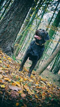 Watchdog - fun shoot in the forest