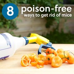 Poison the mice and you are also going to poison the birds of prey and the snakes. There is no reason to use cruel poisons to get rid of mice! Here are 8 effective ways to deal with mice, without using inhumane poison and traps.