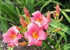 Plants to surround your pond