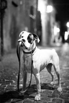 Walk please?