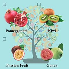 Amazon.com : Eve's Pomegranate Bonsai Seed Kit, Fruit-Bearing, Complete Kit to Grow Pomegranate Bonsai from Seed : Live Indoor Bonsai Plants : Everything Else