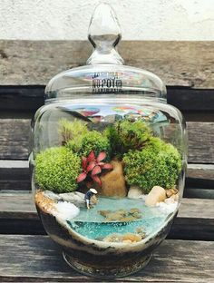 ideas 50 Homemade DIY Terrarium Ideas You Should Try - Terrarium Scene, Terrarium Jar, Small Terrarium, Terrarium Plants, Succulent Terrarium, Succulents Garden, Terrarium Ideas, Indoor Garden, Garden Art