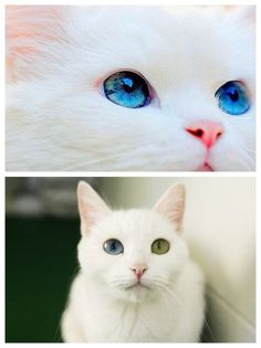 My Cat Zoey looks JUST like this even with one blue eye and green ! <3