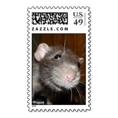 funny rat face postage stamps