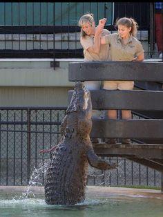 Terri and Bindi Irwin feeding crocs. v@e