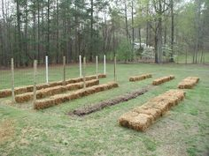 Strawbale Gardening - no weeding, no hoeing, no tilling - 4042.com Forums  This looks like a really easy way to go. Bales of hay instead of augmenting soil. Hmmm.. interesting.