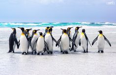 Photograph Kings of the Beach by Ben Goode on 500px
