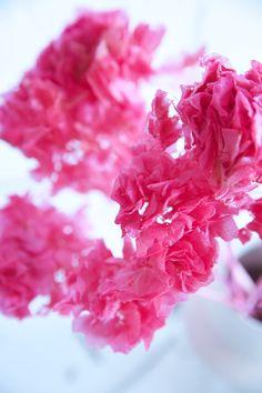 Hortensien - Trockenblume - la fleur douce - Online kaufen Anstatt, Coconut Flakes, Raspberry, Spices, Fruit, Flowers, Dried Flowers, Pentecost, Limelight Hydrangea