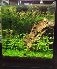 What a beautiful nano-aquascape!  Needs an assassin snail or two to kill the snails in it, though, or they will eventually reproduce and destroy the plants!