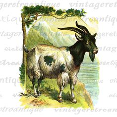 Digital Printable Classic Goat Image Color Illustration Graphic Download. High resolution, high quality digital graphic from antique artwork for fabric transfers, making prints, papercrafts, tote bags, tea towels, and many other uses. Personal or commercial use. This graphic is high quality, high resolution at 8½ x 11 inches. Transparent background version included with all images.