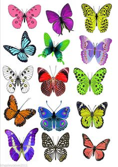 Butterfly Discover 15 X Ex Large Butterflies Vivid Colours Edible Cupcake Wedding Toppers & Garden Butterfly Clip Art, Butterfly Drawing, Butterfly Pictures, Butterfly Painting, Butterfly Wallpaper, Butterfly Watercolor, Butterfly Wings, Edible Cupcake Toppers, Largest Butterfly