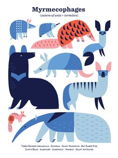 An illustration of mammals that are specialized to eat ants and termites, inspired by vintage school biology charts. Flat Illustration, Digital Illustration, Bat Eared Fox, City Poster, Scottish Fold Kittens, Animal Graphic, Grafik Design, Zine, Ants