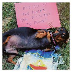 Buy Cardmix Sausage Dog Full Up on Snacks Card Online at johnlewis.com