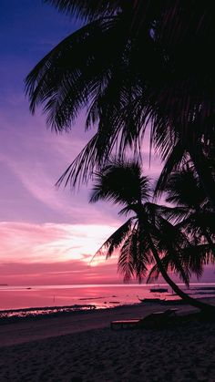 Tree Wallpaper Iphone, Tree Sunset Wallpaper, Apple Wallpaper, Palm Tree Sunset, Palm Trees Beach, Sunset Landscape, Vacation Pictures, Pretty Pictures, Cute Wallpapers