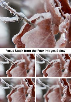 Find out how to use focus stacking to combine a series of photographs and achieve focus across your subject.
