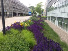 Portfolio City Landscape, Urban Landscape, Landscape Architecture, Landscape Design, Plant Design, Garden Design, Planting Plan, Xeriscaping, Rain Garden